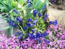 kwiaty-wieloletnie-cieniolubne_m-9423435