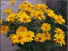 kwiaty-wieloletnie_m-9346675