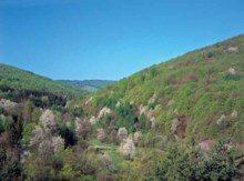 magurski-park-narodowy-zwierzeta_m-9044488