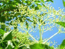 kwiaty-lakowe-i-polne_m-6100265