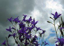 kwiaty-lakowe-nasiona_m-9193658