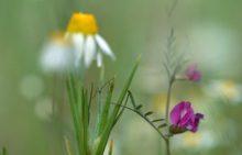 kwiaty-lakowe-nazwy_m-3265196