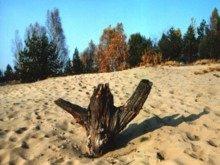 pustynia-bledowska-zwiedzanie_m-3609035