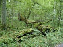 puszcza-bialowieska-flora_m-1027072