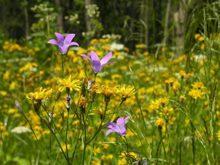 rosliny-zielne-polne_m-3367863