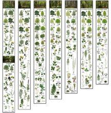 rosliny-zielne-w-lesie_m-3091257