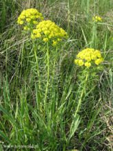 rosliny-zielne-w-polsce_m-9134839